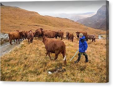 A Farmer Droves His Cattle Canvas Print
