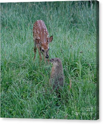 Canvas Print featuring the photograph A Fawn And A Woodchuck by Jim Lepard