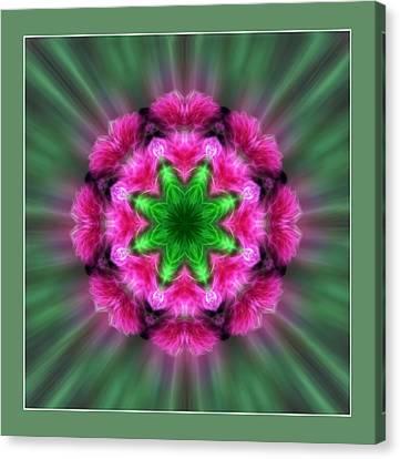 A Featrhered Star Canvas Print