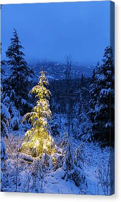 A Festive Mountain Hemlock Evergreen Canvas Print by Kevin Smith