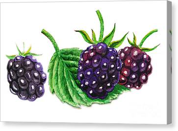 Just A Few Blackberries Canvas Print
