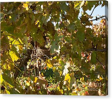 Canvas Print featuring the photograph A Few Grapes Left For The Birds by Carol Lynn Coronios