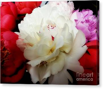 A Few Peonies Canvas Print by Heather L Wright