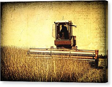 A Field For Harvest Canvas Print by Lincoln Rogers