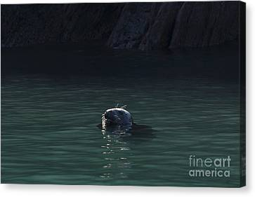 A Fine Day For A Swim Canvas Print by Anne Gilbert