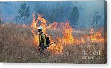A Firefighter Ignites The Norbeck Prescribed Fire. Canvas Print by Bill Gabbert
