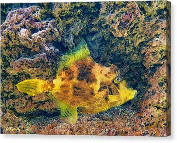 A Fish Called Wanda Canvas Print by George Rossidis