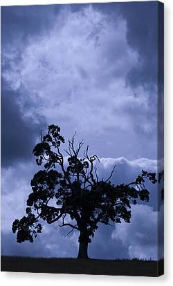Canvas Print featuring the photograph A Flash Of Blue Tree by Sally Ross
