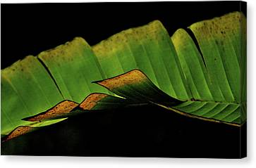 A Floating Heliconia Leaf Canvas Print