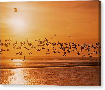 A Flock Of Birds Fly Over The Beach Canvas Print by Robert L. Potts