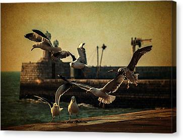 A Flock Of Seagulls Canvas Print by Marco Oliveira