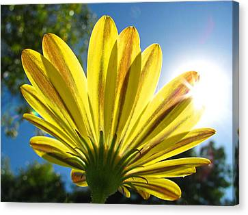 A Flower In The Garden Canvas Print by Sergio Diaz