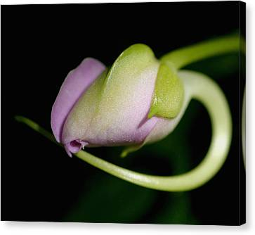 Canvas Print featuring the photograph A Flower Is Born by Gene Walls