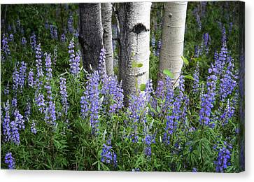 A Forest Of Blue Canvas Print by The Forests Edge Photography - Diane Sandoval