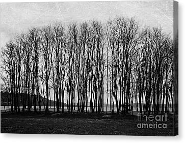 A Forest Of Trees Canvas Print