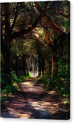 A Forest Path -dungeness Spit - Sequim Washington Canvas Print