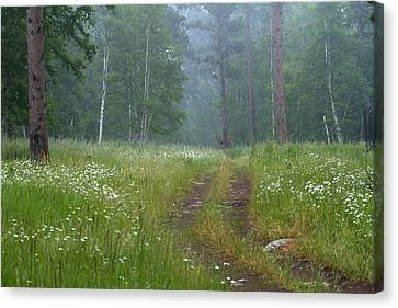 A Forest Visitor Canvas Print by Sue Cullumber
