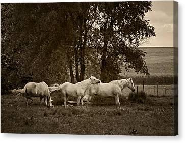 A Friend Indeed - Horses  Canvas Print by Nikolyn McDonald