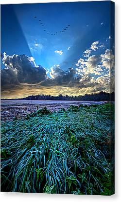 A Frosty Morning Canvas Print by Phil Koch