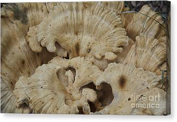 A Fungus Among Us 3 Canvas Print by Teresa Mucha