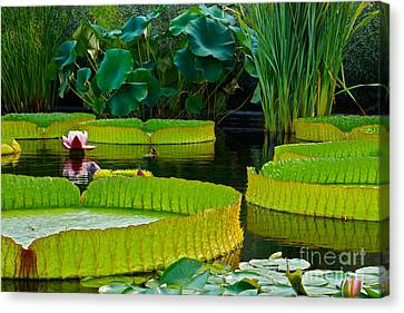 A Garden In Gentle Waters Canvas Print by Byron Varvarigos
