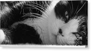 A Gentle Cat - Monochrome Canvas Print by David Warrington