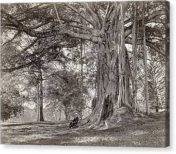 A Gentleman Sitting Beneath A Large Native Tree In British Ceylon Canvas Print by Scowen and Co