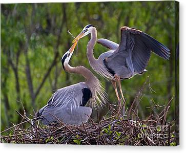 A Gift For The Nest Canvas Print
