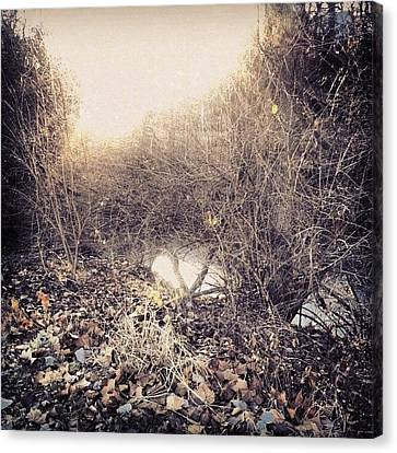 Instago Canvas Print - A Glimpse Of The Creek Through The by Genevieve Esson