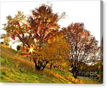 Canvas Print featuring the photograph A Golden Glowing Autumn Sunset by Jay Nodianos