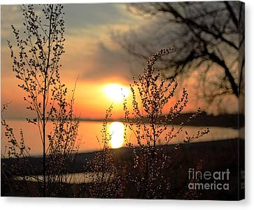 Shelley Myke Canvas Print - A Golden Moment In Time by Inspired Nature Photography Fine Art Photography