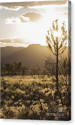 Morn Canvas Print - A Golden Morning by Linda Lees