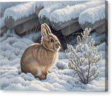 A Good Place - Bunny Canvas Print by Paul Krapf