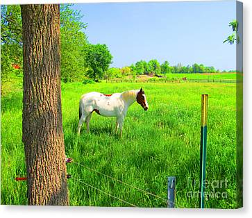 A Good Place To Roam Around Canvas Print by Tina M Wenger