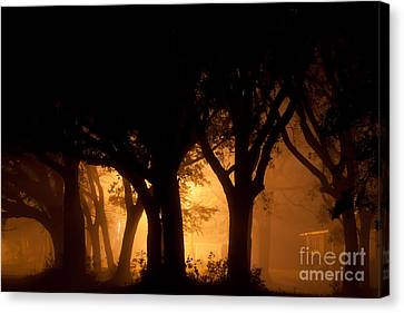 A Grove Of Trees Surrounded By Fog And Golden Light Canvas Print