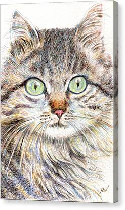 A Handsome Cat  Canvas Print