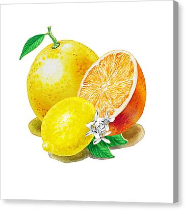 A Happy Citrus Bunch Grapefruit Lemon Orange Canvas Print by Irina Sztukowski