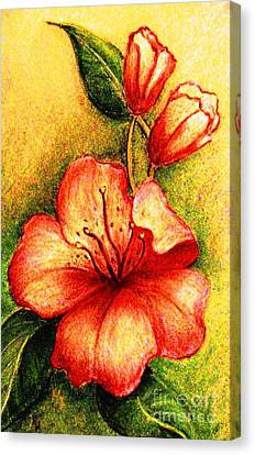 A Harbinger Of Springtime Canvas Print by Hazel Holland