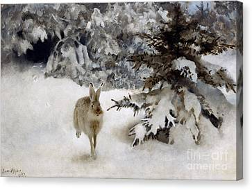 A Hare In The Snow Canvas Print by Bruno Andreas Liljefors