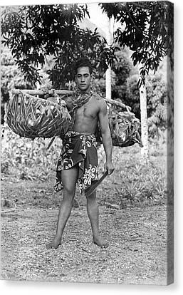 A Hawaiian With Coconuts Canvas Print by Underwood Archives