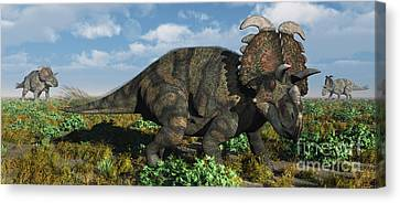 A Herd Of Albertaceratops Canvas Print by Mark Stevenson