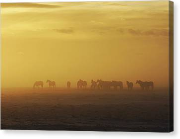 A Herd Of Horses In The Morning Fog Canvas Print by Roberta Murray