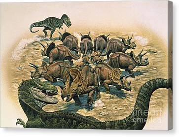 A Herd Of Triceratops Defend Canvas Print