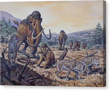 A Herd Of Woolly Mammoth And Scimitar Canvas Print by Mark Hallett