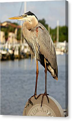A Heron In The Marina Canvas Print