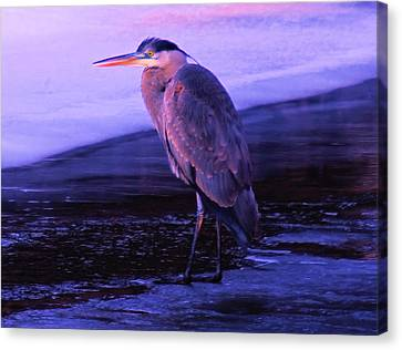 A Heron On The Moyie River Canvas Print by Jeff Swan