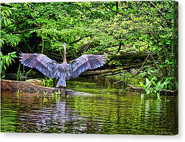 Canvas Print featuring the photograph A Heron Touches Down by Eleanor Abramson