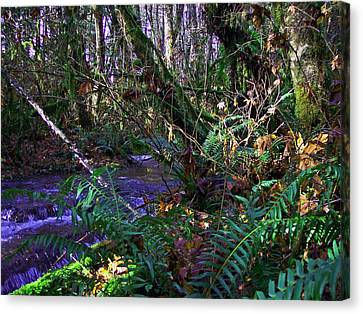 A Hidden Creek Canvas Print by Steve Battle