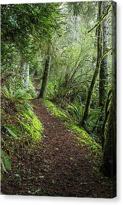 Fort Stevens State Park Canvas Print - A Hiking Trail Goes Around Coffenbury by Robert L. Potts
