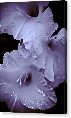 A Hint Of Purple Canvas Print by Peggie Strachan